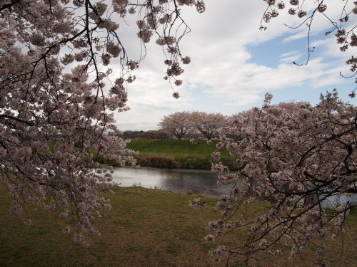 柳瀬川1.jpg