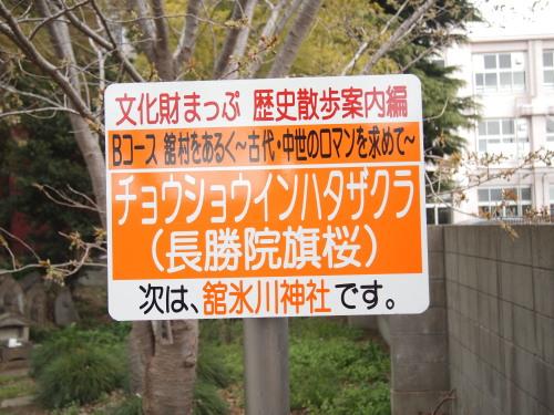 柳瀬川4.jpg