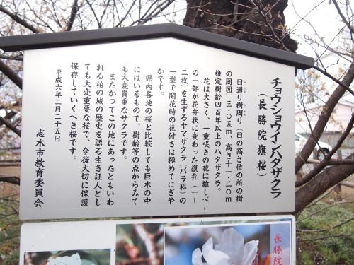 柳瀬川5.jpg