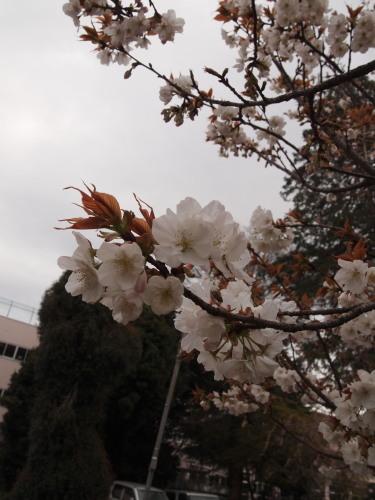 柳瀬川7.jpg