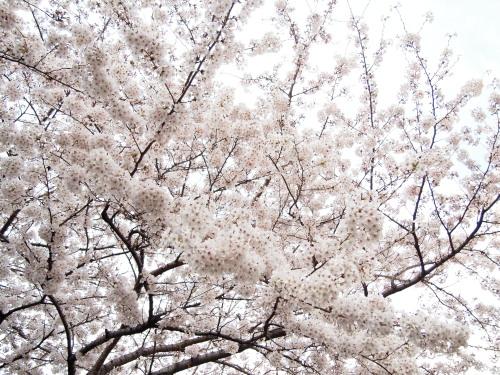 黒目川2.jpg